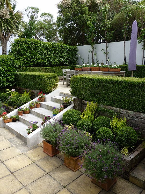 Hedge garden design nursery kelburn designed by for Garden hedge designs