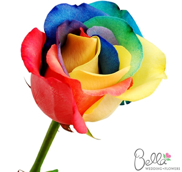 Rainbow rose the rainbow connection pinterest for Where to find rainbow roses