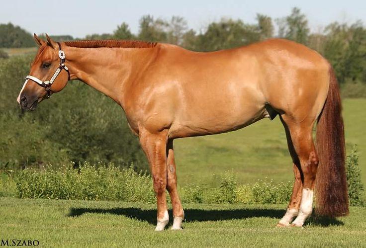 red dun quarter horse | Horses - Fire | Pinterest