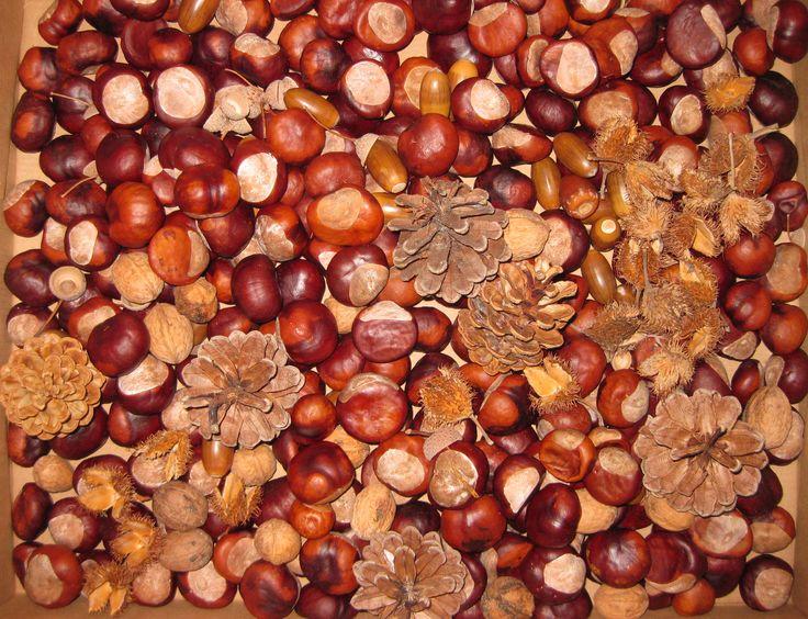 Bastelmaterialien aus dem Lietzenseepark Kastanien