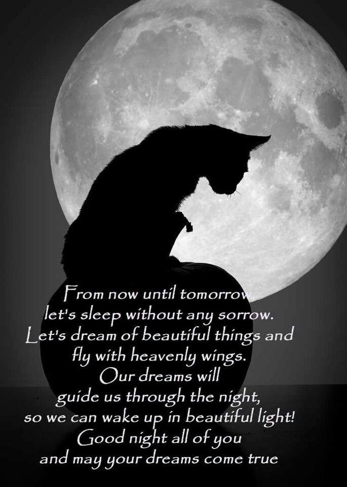 Good night blessings quotes quotesgram