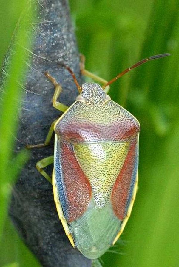 Colorful Insects 7 Colorful Insects | BEAUTIFUL BUGS ...