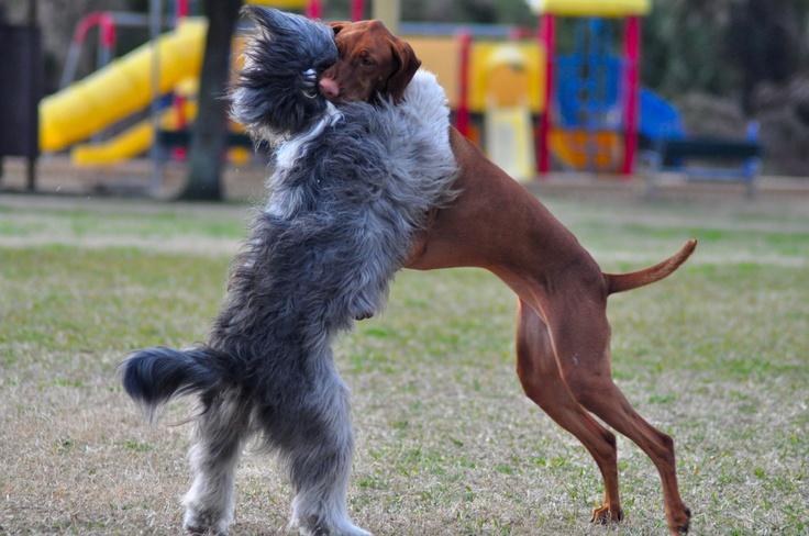Ormond Beach Dog Parks