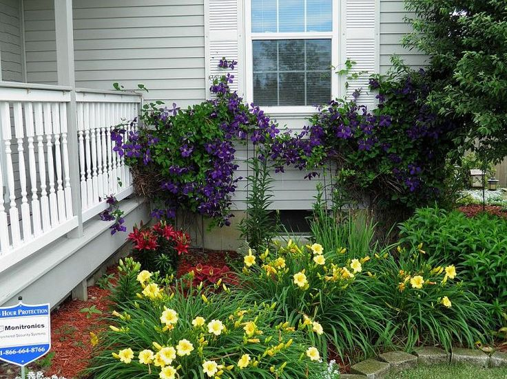 clematis in bloom front flower beds