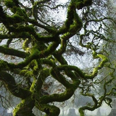 Pin by Tee Thonen on Old Moss Womans Secret Garden fan