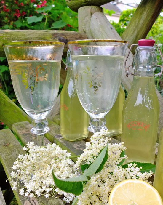 Homemade elderflower cordial and a little family foraging