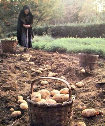 """As you can see from the photo above, Tasha was a true potato lover.  In the book """"Tasha Tudor's Garden"""", she shares with her readers, """"I'm crazy about potatoes - it must be my Irish ancestry""""!  Isn't she adorable in her cloak digging her potatoes?"""