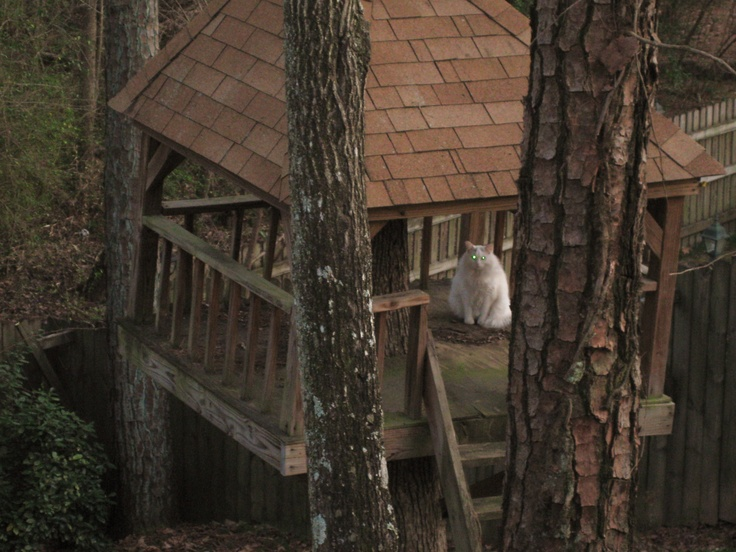 Buddy just playing in the treehouse
