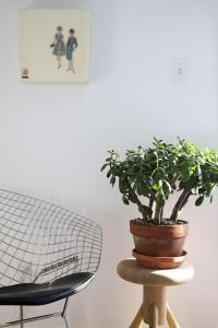 Jade Plant Remodelista