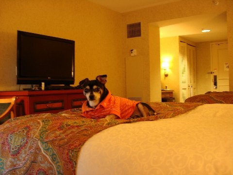 las vegas hotel for dogs