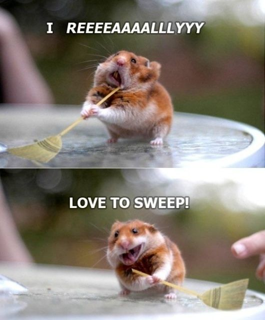 Super funny animal pictures with captions