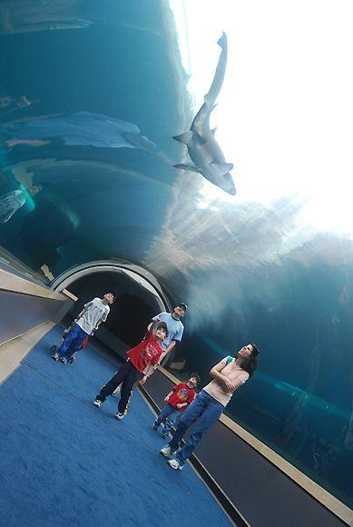 Ppg Aquarium Hey Yinz It 39 S A 39 Burgh Thang Pinterest