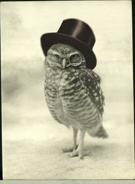 Owl with top hat and monocle.