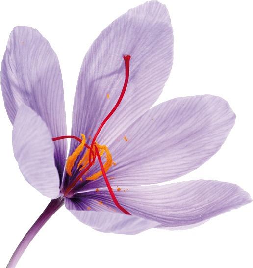 Flor de Azafrán :) ¡Bella!