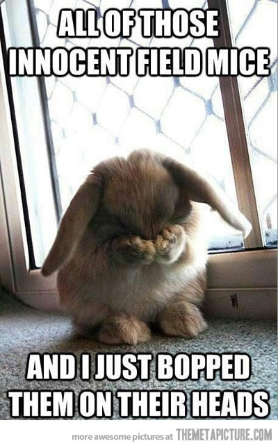 this bunny could never be mean...