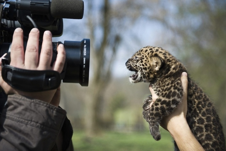 hi, i am a baby leopard and i am the cutest thing ever!!