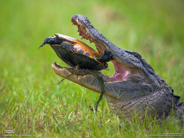 okefenokee swamp english essay