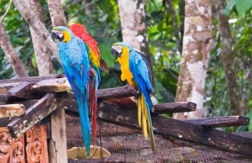 Beautiful Macaws...boy do they hurt when they bite!