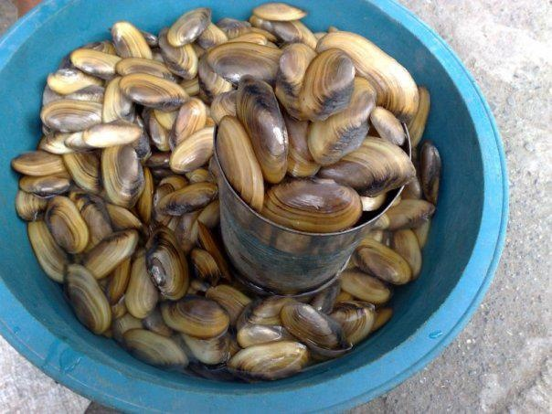 Clams! | Incredibly Amazing! | Pinterest