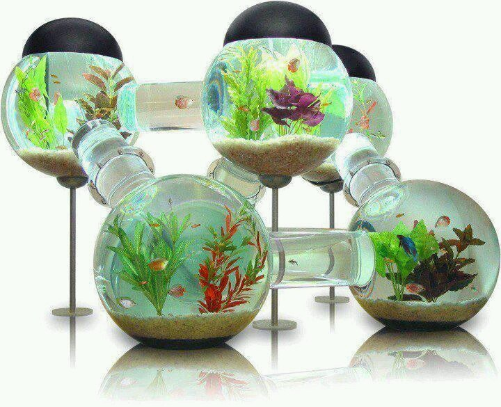 Cool fish bowl amazing fish pinterest for Cool fish bowls