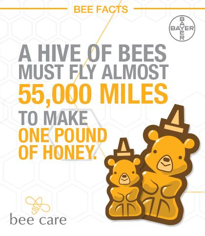 Bee Facts