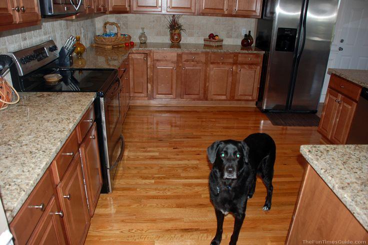 Comhardwood Floors In Kitchen : ... Spray Mop vs Shark Steam Mop – Which Is Best For Hardwood Floors