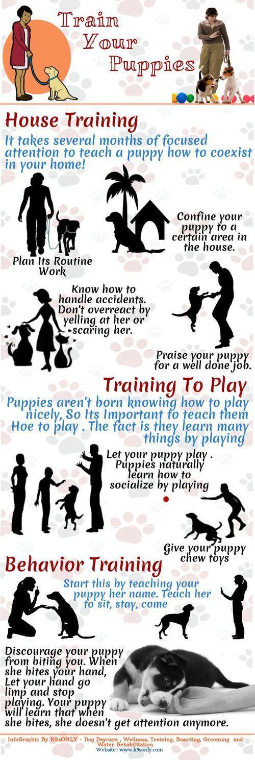 training tips puppy training