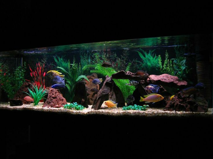 african cichlid tank - Google Search Aquarium designs Pinterest