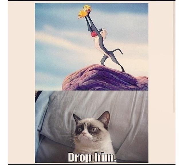 Mad Cat Quotes. QuotesGram