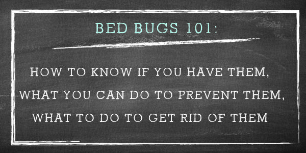 Check For Bed Bugs Bugs Pinterest