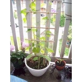 Diy Potted Plant Trellis Garden Pinterest 400 x 300
