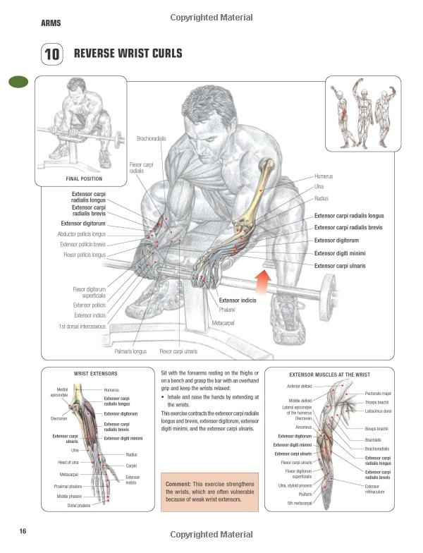 Frederic Delavier Strength Training Anatomy Gallery - human body anatomy