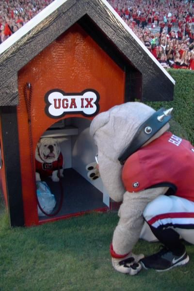 Georgia bulldogs mascot hairy dawg wonders if there s room for one