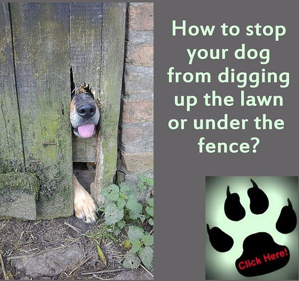 stop dogs from digging your yard
