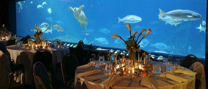 Camden Aquarium Engagement Party Wedding Pinterest