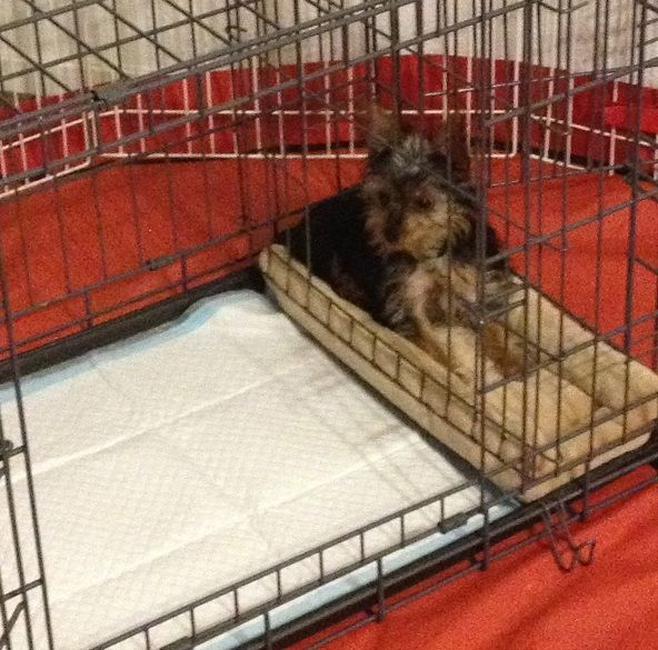 Modern puppies potty training apartment dogs
