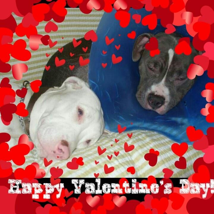 zazzle valentines day