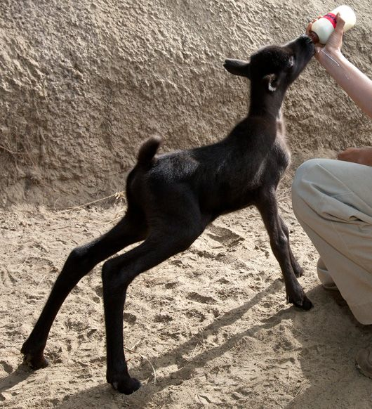 Baby reindeer happiest place on earth pinterest