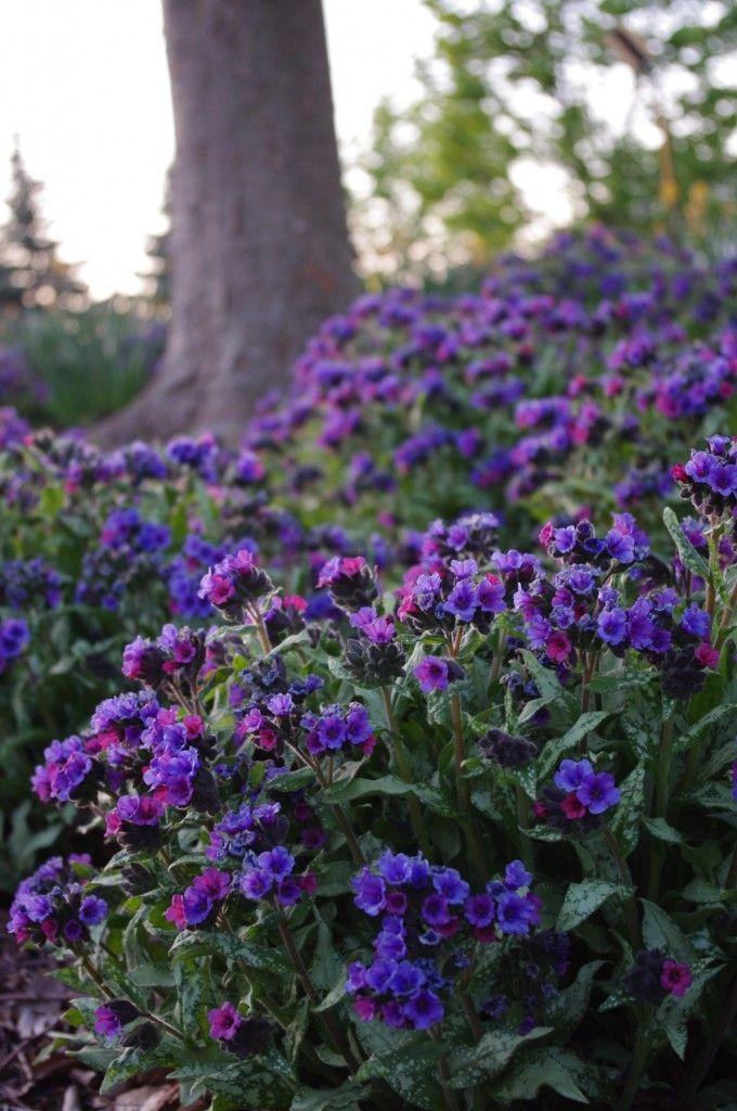 Top 28 Zone 5 Shade Perennials Perennial Garden Plans