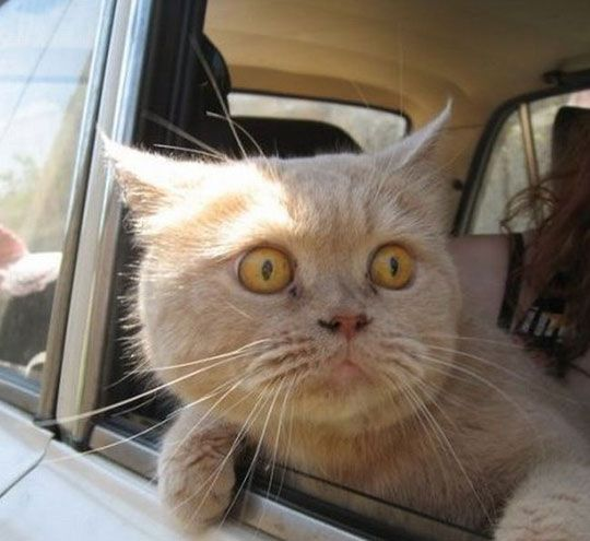 cat-face-out-window.jpg 540×495 pixels