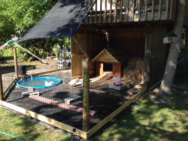 finally finished my ducks enclosure love my duck s