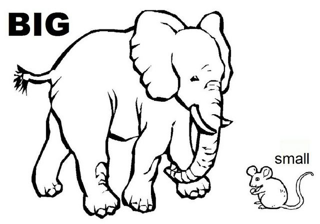 opposites coloring worksheet