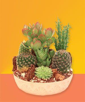 Fotografije kaktusa - Page 2 09fba659347f7f5dba31a99a75950270