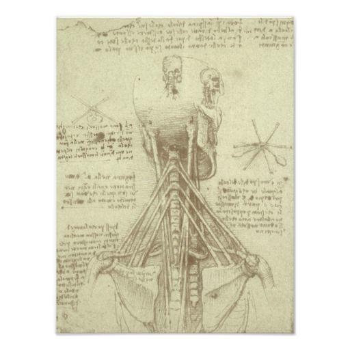 Anatomy Sketch of Spinal Column Leonardo da Vinci