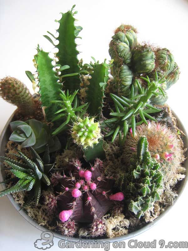Indoor garden cactus jungle top view