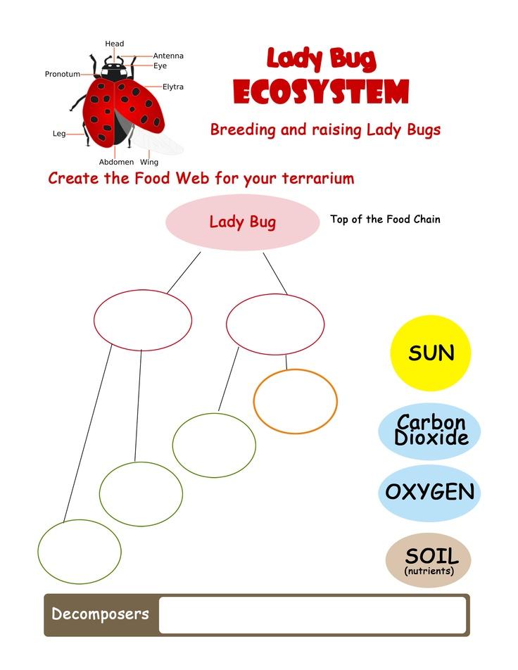 Energy Flow Through Ecosystem Worksheet Pictures to Pin on – Energy Flow in Ecosystems Worksheet