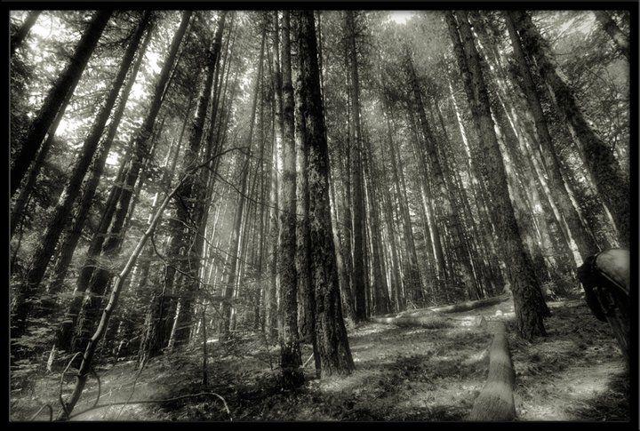 Ağaçlar trees
