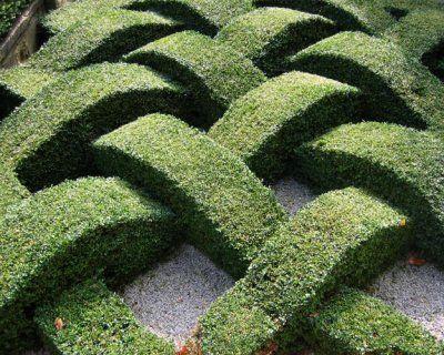 Amazing basket weave design! Topiary Gardens at Washington Old Hall, Tyne & Wear, U.K.