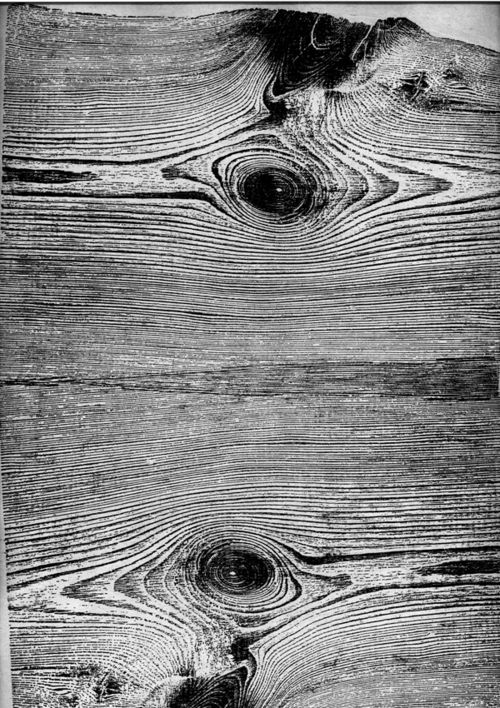Black and White Wood Grain Texture
