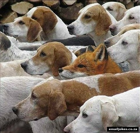Fox Hunt:  Rule #1 -  When you are in deep sh*t, look straight ahead, keep your mouth shut and say nothing.